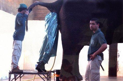 http://www.lememe.com/wp-content/uploads/2011/09/elephant-search.jpg