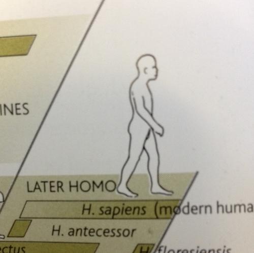 later homo