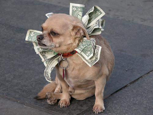money dawg