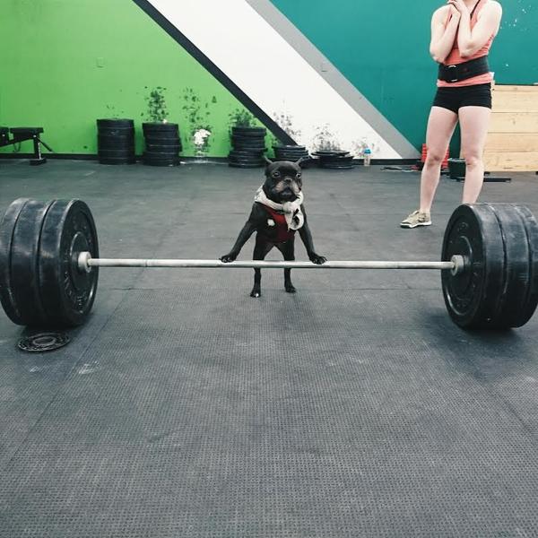 dog lift
