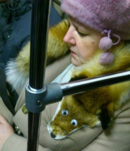 googly fox