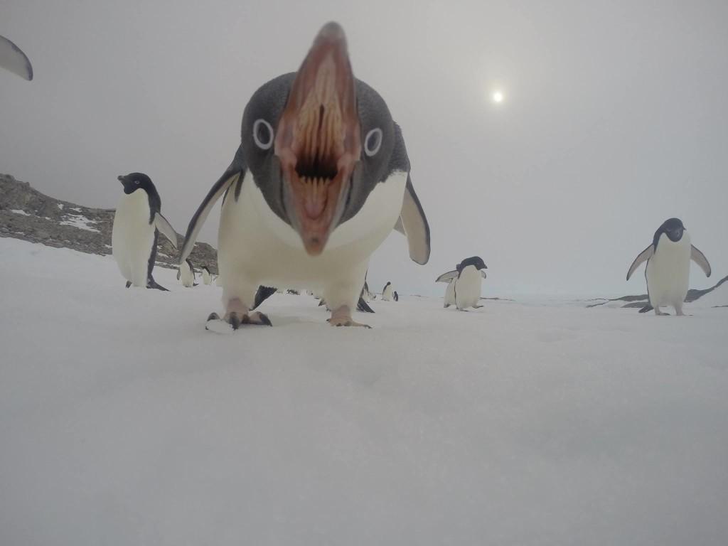 penguin fuck