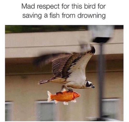 mad respect