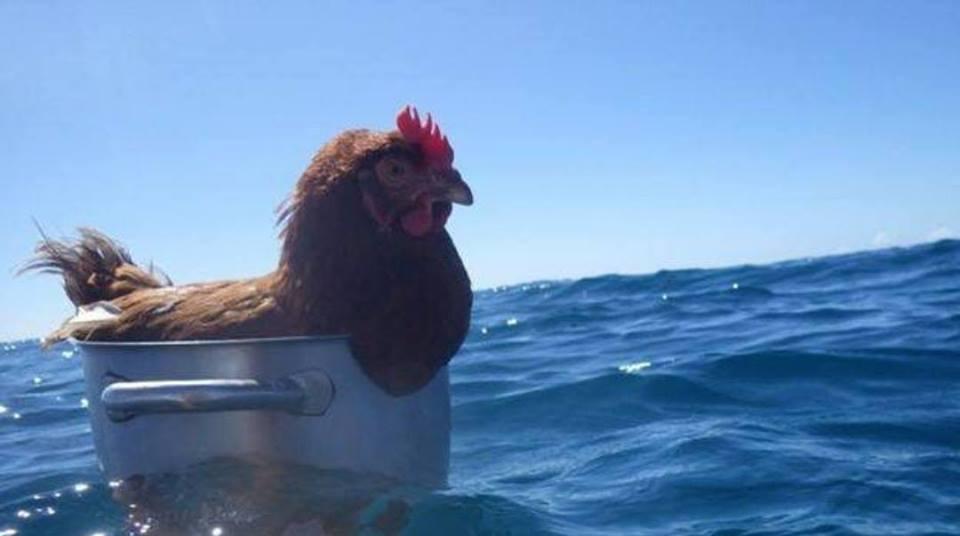 salty chicken