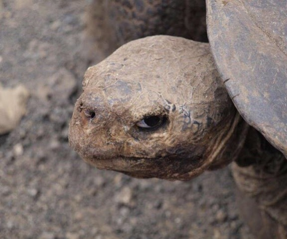 side eye tortoise